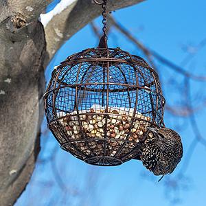 Vogel an einer Futterkugel